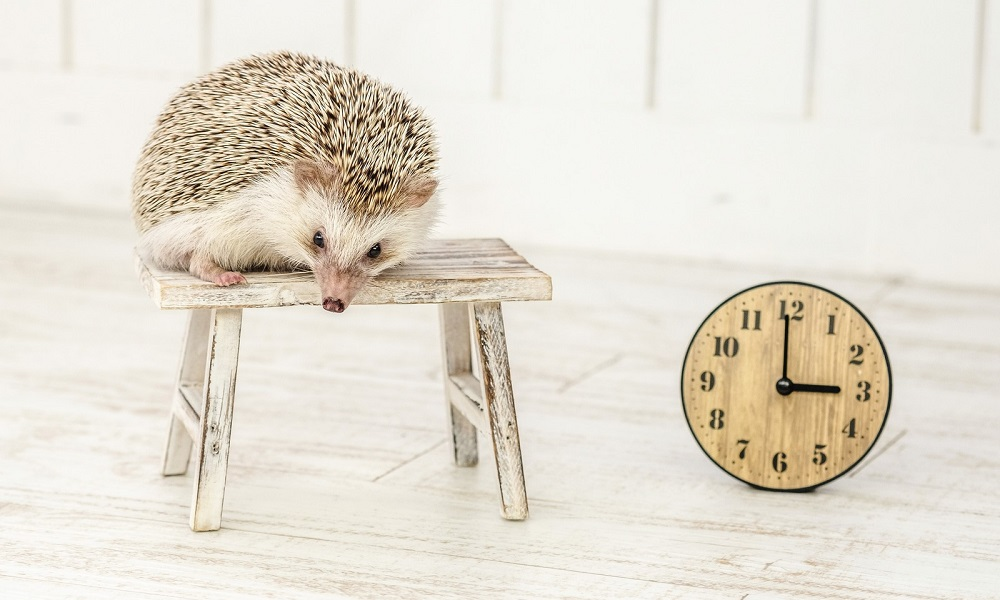 hedgehog_and_watch